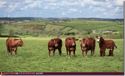 wtf-pics-imposter-cow